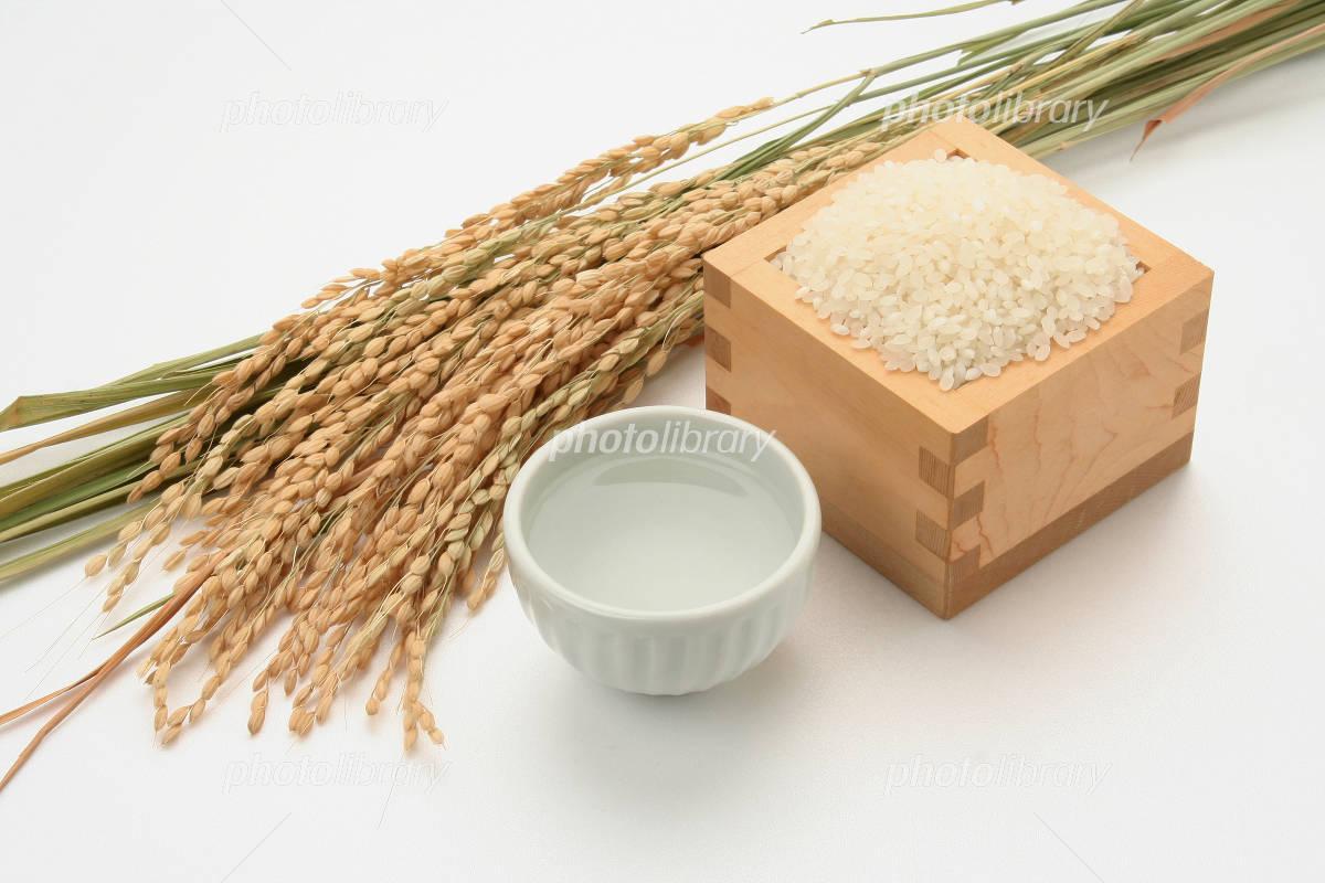 Sake and rice-rice white back Photo