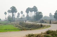 Road in the morning of India Bodh Gaya Sujata Village Stock photo [3411507] Sujata