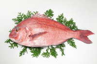 Red Snapper Stock photo [3414111] Red