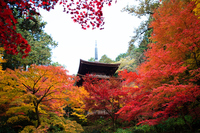 Autumn leaves of Koto Miyama Kongo Watera Stock photo [3612238] Kongo