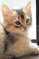 Kitten Stock photo [3623496] Somali