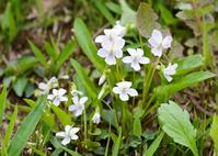 Ariake violet Stock photo [3727889] Ariake