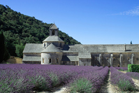 France Notre-Dame de Senanque Abbey and lavender Stock photo [3840021] Senanque