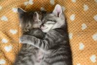Kitten sleep hugging each other Stock photo [3841435] Cat