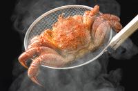 Crab Stock photo [3941092] Hair