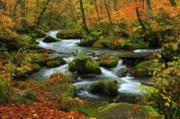 Oirase mountain stream of Towada, Aomori Prefecture autumn leaves Stock photo [3946872] Aomori