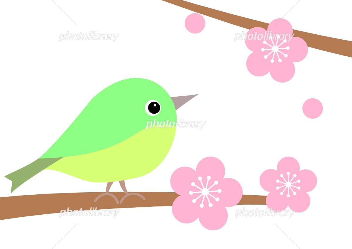 梅と鶯 イラスト素材 4028367 フォトライブラリー Photolibrary