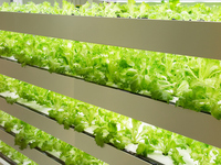 Vegetable plant Stock photo [4022308] Vegetable