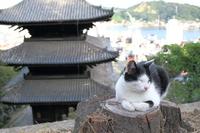 Onomichi cat Stock photo [4025312] Cat