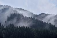 Mountain fog stand Akita cedar Beautiful wood Stock photo [4031171] Japanese