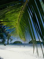 Palm Hakage Stock photo [145163] Palm