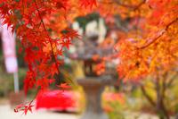 Autumn leaves of 曼珠 Institute Stock photo [4782923] Temple