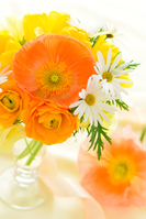 Spring Flower Arrangement (Yellow) poppy, Margaret, ranunculus Stock photo [4868130] flower