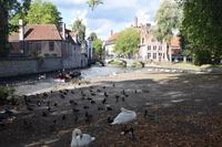 Lake Park of love Stock photo [4974547] Belgium
