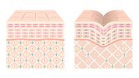Healthy skin Shiwahada [4974676] skin
