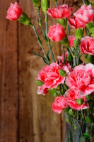 Carnation Stock photo [4977627] Mother's
