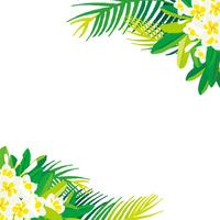 南国の花の写真素材 人気順 フォトライブラリー Photolibrary