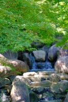 Blue maple of Japanese garden Stock photo [5073048] garden