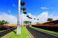 Road to Hawaii Beach, Hawaii Stock photo [5076889] Island