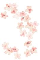 イラスト Cherry blossoms, large size(5258708)