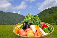 写真 A group of blue sky and vegetables(5260816)