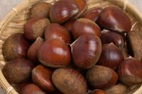 写真 chestnut(5261137)