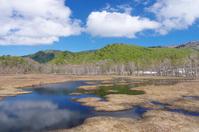 写真 Ozegahara in early spring(5261521)