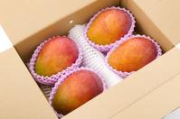 写真 Apple Mango(5261695)
