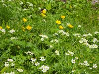 写真 Flower garden of Hakusanutichige and Shinano kimbai(5262133)