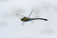 写真 Fly flying bitch fly(5262286)