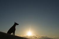 写真 Doberman's silhouette(5265277)