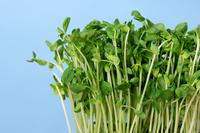 写真 Up-seedlings(5265698)