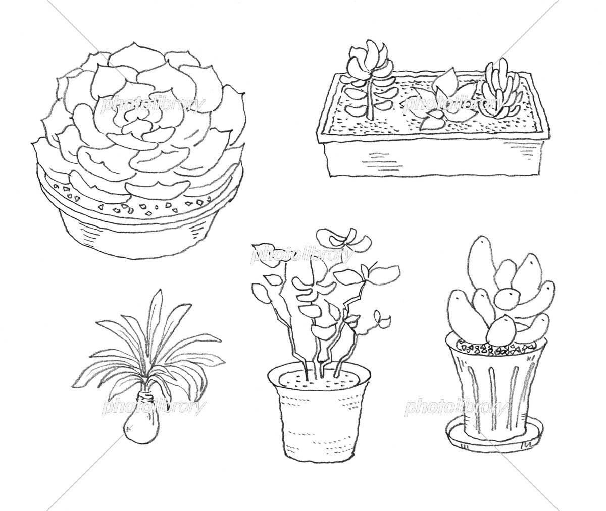 多肉植物 イラスト素材 5345312 フォトライブラリー Photolibrary