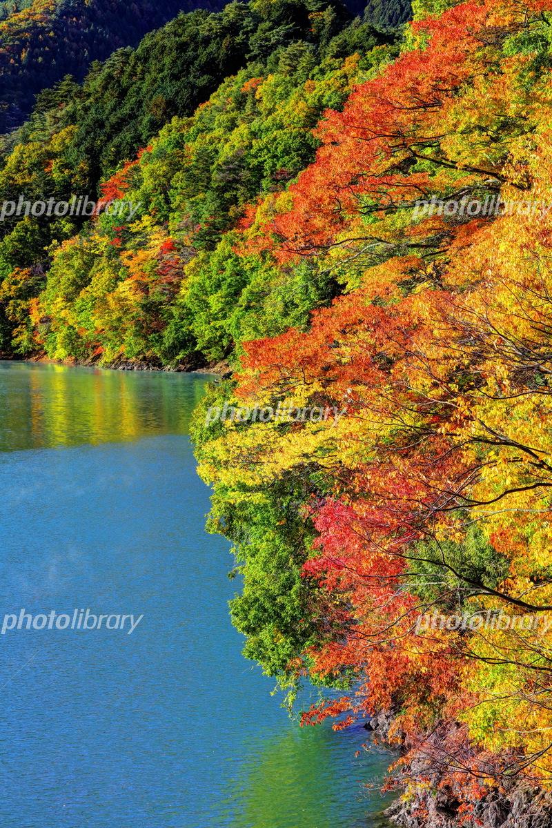 奥多摩 湖 紅葉