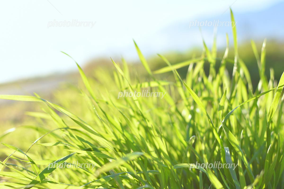 草原の草の写真