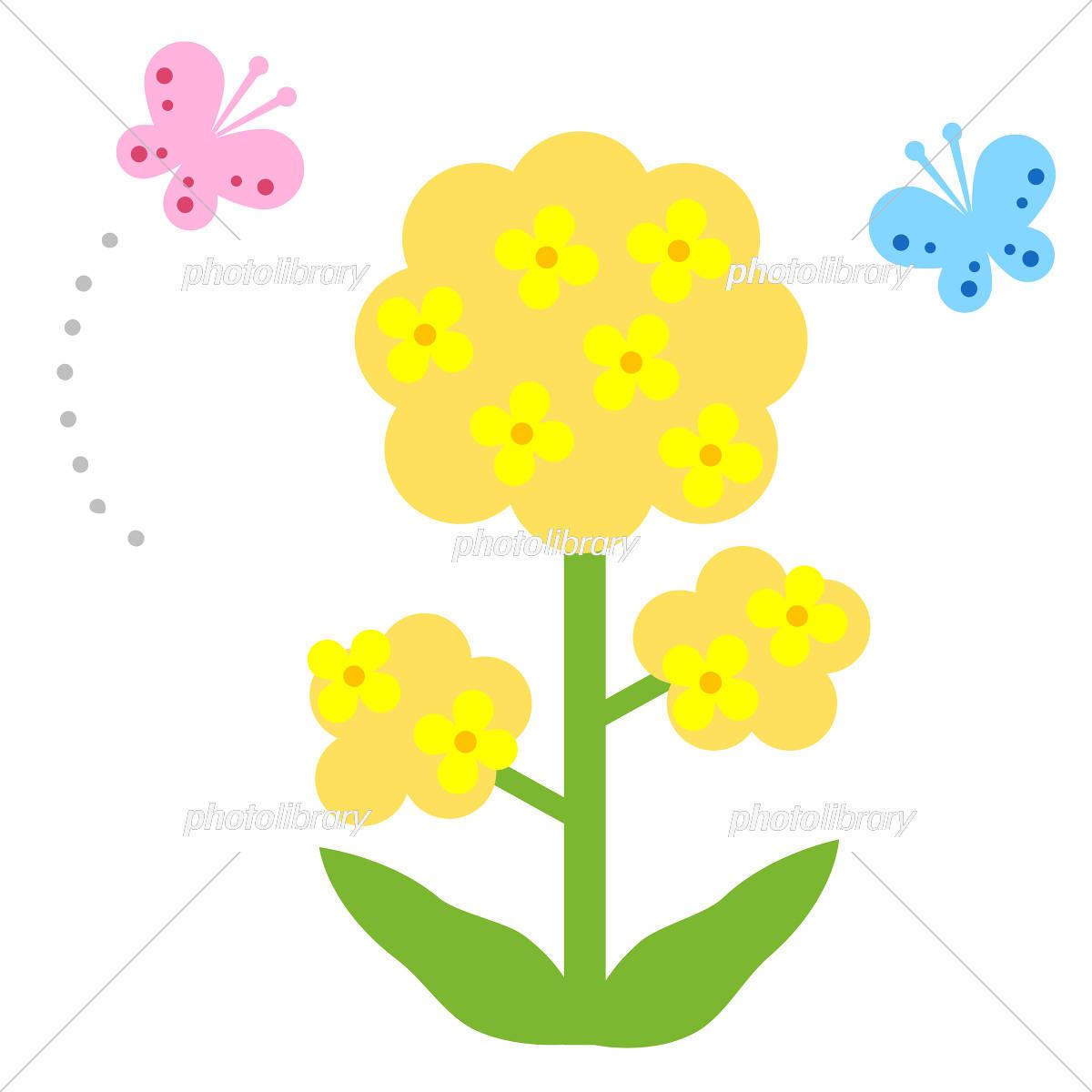 春イメージ 菜の花と蝶々 イラスト素材 [ 5350218 ] - フォトライブ
