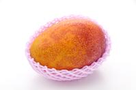 写真 Apple Mango wrapped in a fruit cap(5354119)