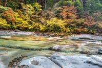 写真 Autumn leaves of Kagawa River(5355543)
