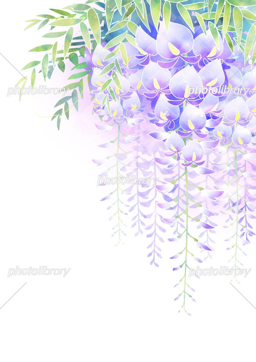 藤の花 イラスト素材 5414065 フォトライブラリー Photolibrary