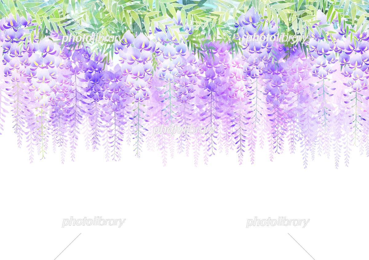 藤の花 イラスト素材 5414066 フォトライブラリー Photolibrary