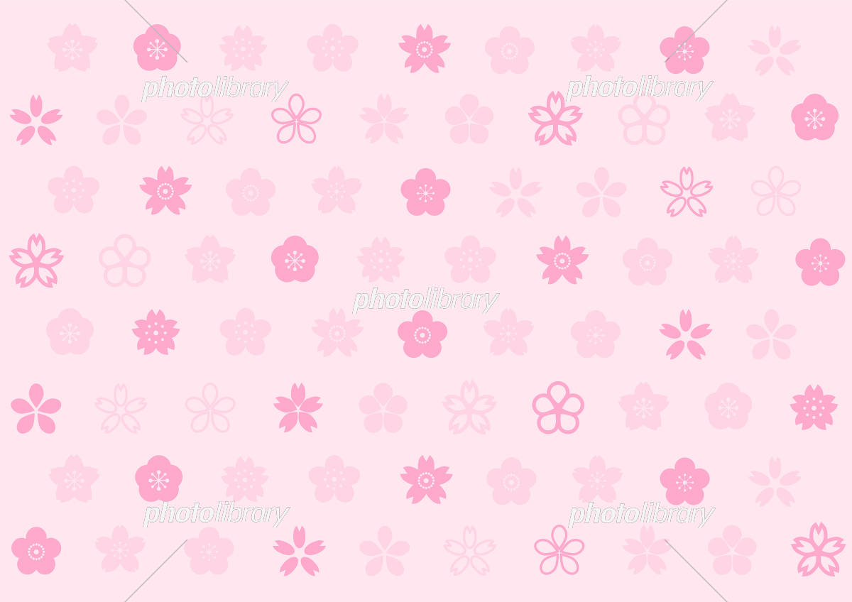 桜 桃 梅 花柄 イラスト ピンク背景 イラスト素材 [ 5479971 ] - フォト