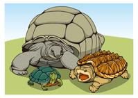 イラスト Three types of turtle(5547639)