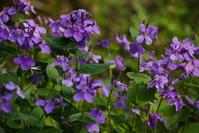 写真 Flower of Hanadai Con(5548117)