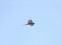 写真 Flying Hightaka(5548369)