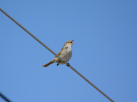 写真 Flying squirrel(5548370)