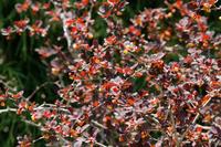 写真 Megi flowers(5548505)