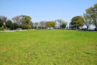 写真 Park lawn and blue sky(5549638)