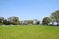写真 Park lawn and blue sky(5549645)