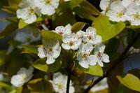 写真 Yamanashi's flower(5549750)