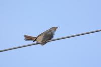 写真 Flying squirrel(5549753)